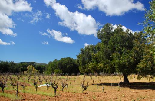Dryfarmed vineyards of Valle de Guadalupe