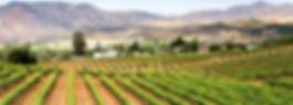 Vineyard site in Mexico's Vallé de Guadalupe