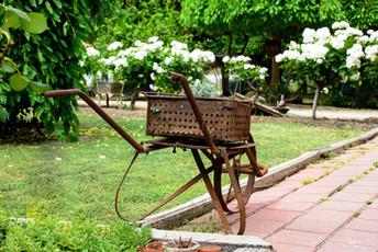Flowering wheelbarrow.jpg