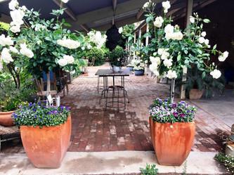 Homestead verandah.JPG