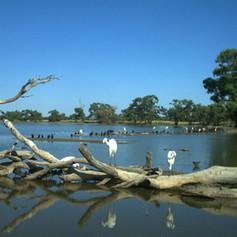 Paika Waterfowl
