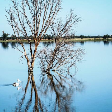 Pelican on the beautiful lake - Copy.jpg