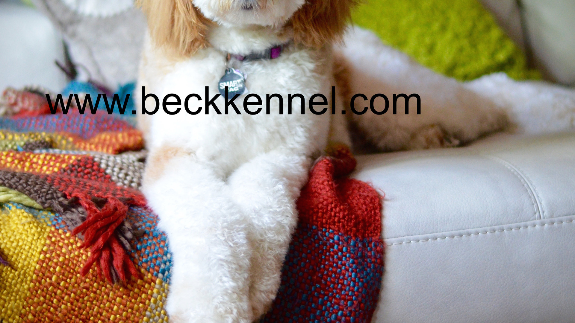 Beck Kennel's Ruby