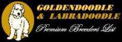 Goldendoodle Premium Breeder