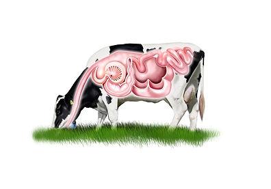 Microbioma bovinos