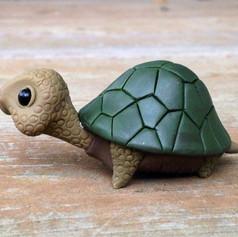 clat-turtle-.jpg