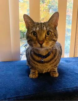My cat Dexter