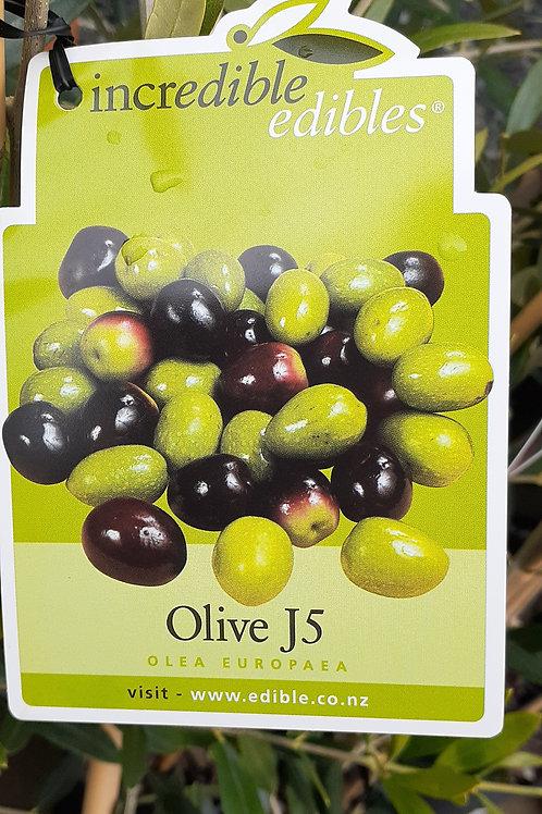 Olive J5 4lt
