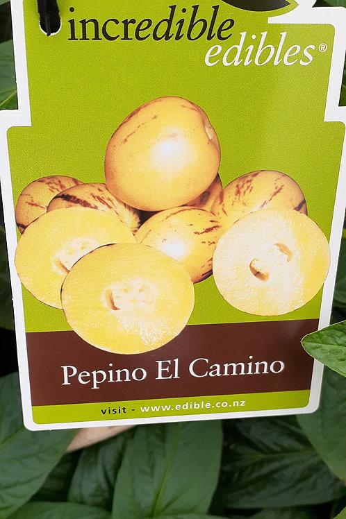 Pepino El Camino 1.9L