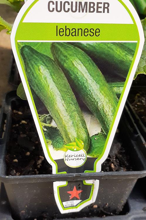 Cucumber Lebanese 9cm