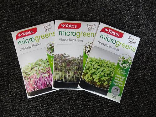 Cabbage Red Yates microgreens