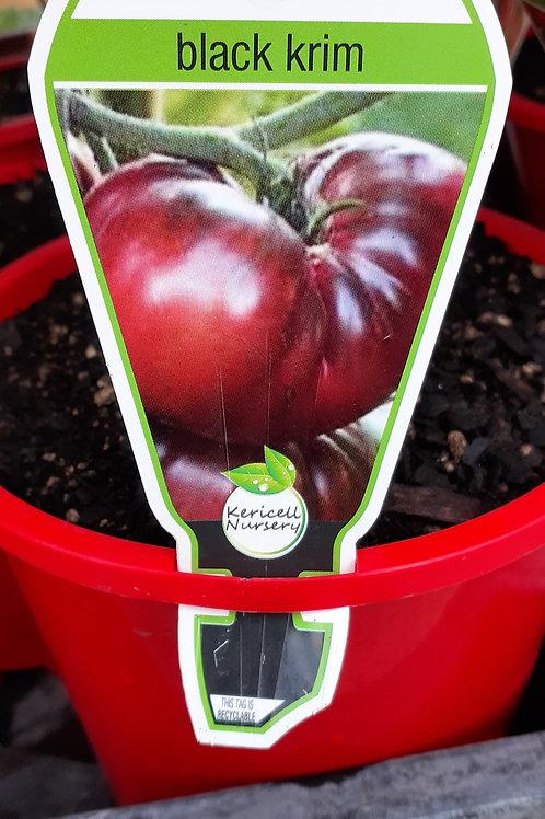 Grafted Tomato Black Krim 1.3L