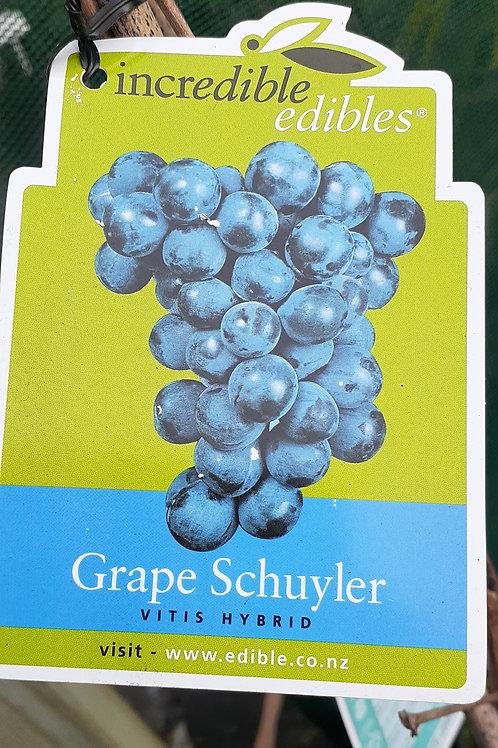 Grape Schuyler 3L