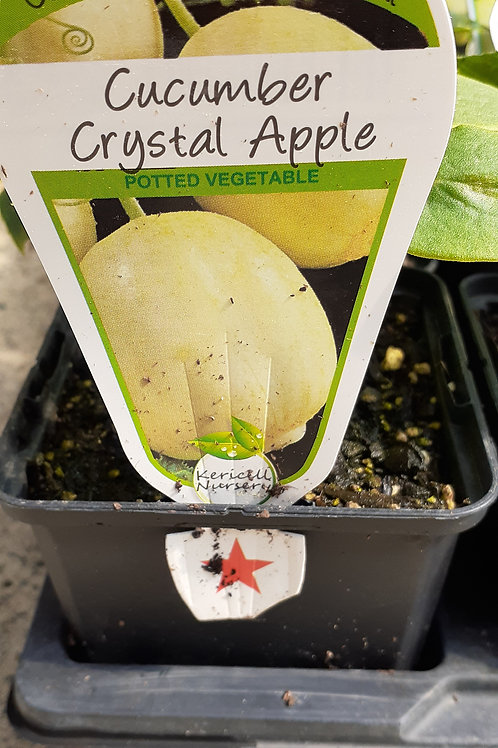 Cucumber Crystal Apple 9cm