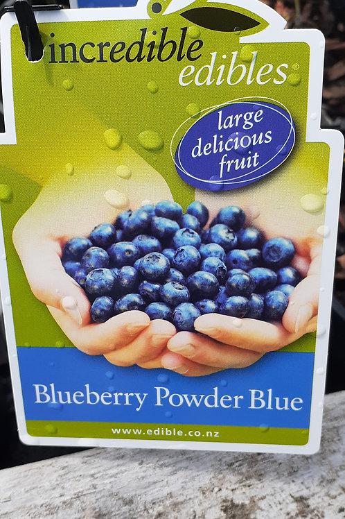 BLUEBERRY POWDER BLUE 1.9L