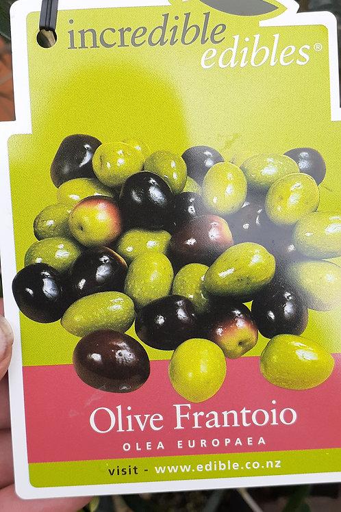 Olive Frantoio 1.9L