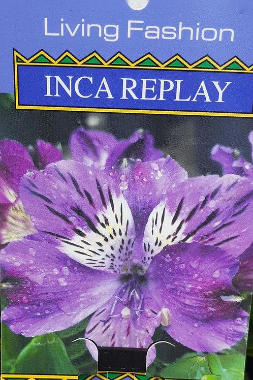Alstroemeria Inca Replay 14cm