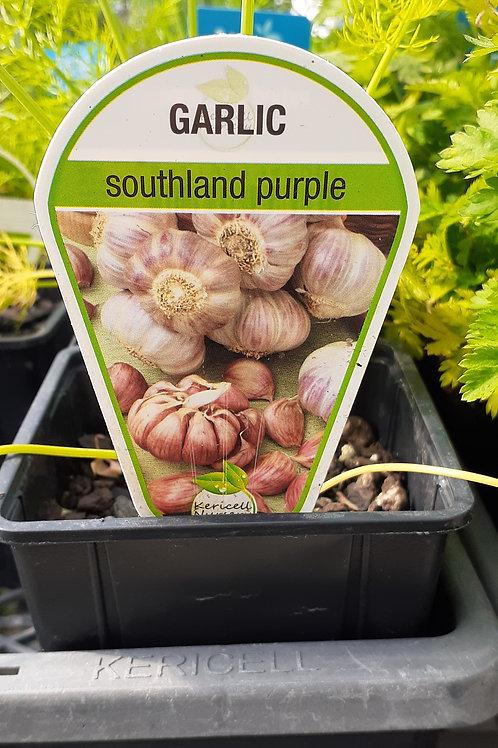 Garlic Southland Purple 9cm