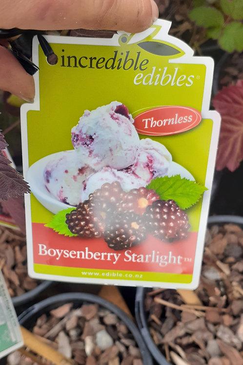 Boysenberry Starlight 3lt