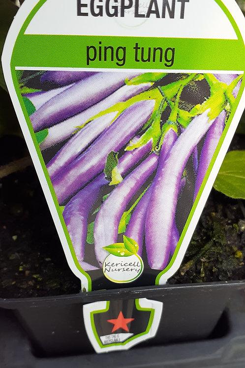 Eggplant Ping Tung 9cm