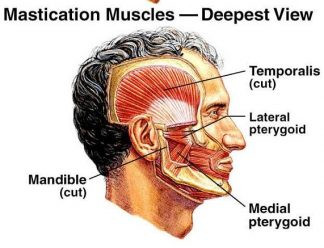 Your Chiropractor + Your Dentist + Your TMJ