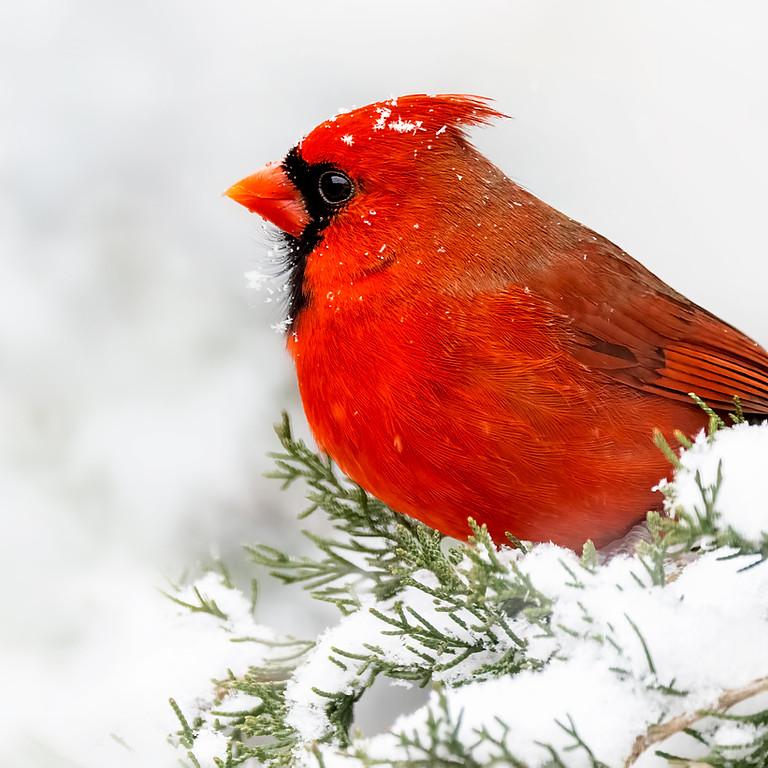 Northern Shenandoah Valley Christmas Bird Count