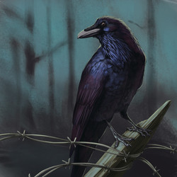 """""""Quoth the Raven..."""""""