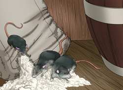 Rats in the Hold