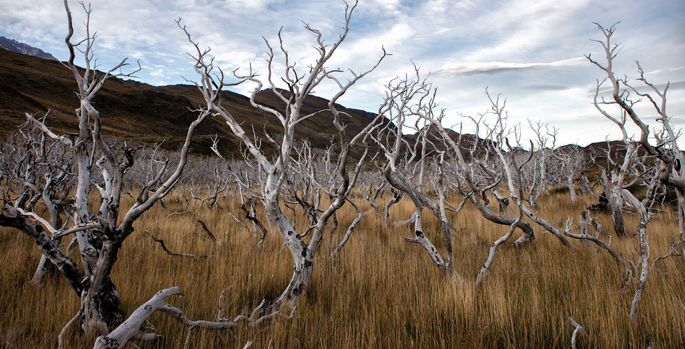 Rodrigo Vega Fotografo _ Parque Nacional
