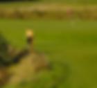 Greenfee-Partner des Golf-Park Sülfeld, nördlich von Hamburg