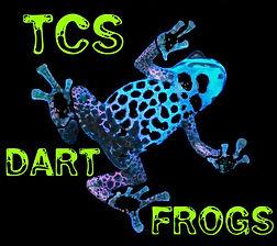 High Quality Captive Bred Dart Frogs, Feeders, Vivarium Supplies, Terrarium Plants