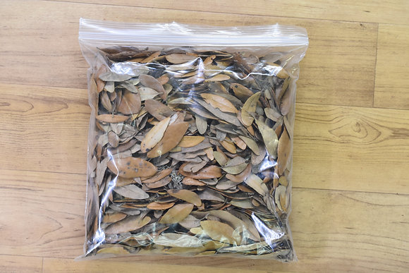 Live Oak Leaf Litter 1 gallon