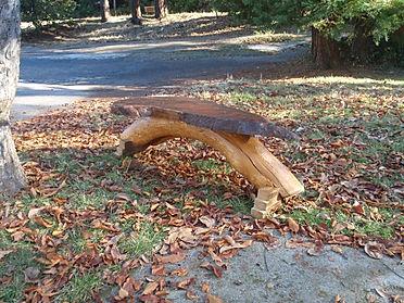 Red wood Burl with Cedar Legs