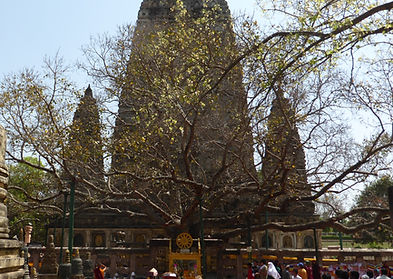 Bodhi Tree. Bodhgaya, India. Workshop about Buddhist Meditation with Mahametta Akademie