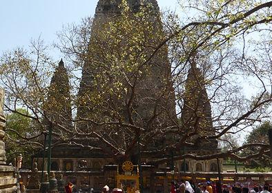 Bodhi Baum. Bodhgaya, Indien.Buddhistisches Meditation Seminar mit Mahametta
