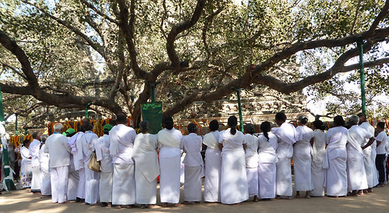 Buddhist pilgrims praying under the Bodhi Tree in Bodhgaya. Spiritual Travels MahaMetta