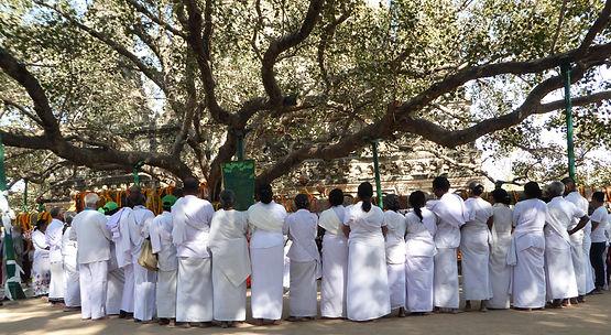 Buddhistische Pilgern, die unter dem Bodhi-Baum in Bodhgaya beten. Spirituelle Reisen MahaMetta