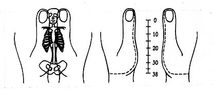 Metamorphose Hände. Pränatale Methode Behandlung mit Maya Mahametta