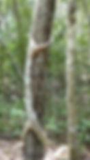 Biosphäre von Calakmul. Mahametta Reisen