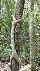 Biosphere of Calakmul. Mahametta Travels