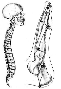 Metamorphische / Pränatale Methode. Behandlung mit Maya Mahametta