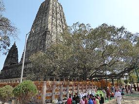 Stupa und Bodhi Baum in Bodhgaya, Indien. Spirituelle Reisen MahaMetta
