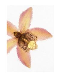 elise-gerosa-fleurs