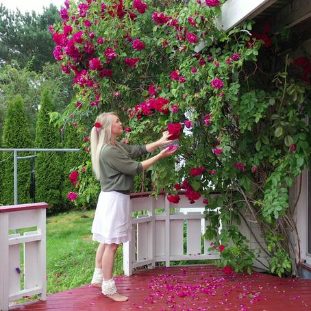 Lag ditt eget Økologiske Rosevann