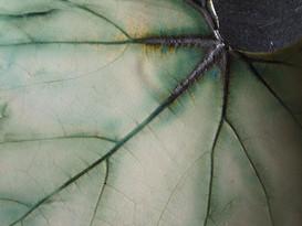 Leaf dish (detail)