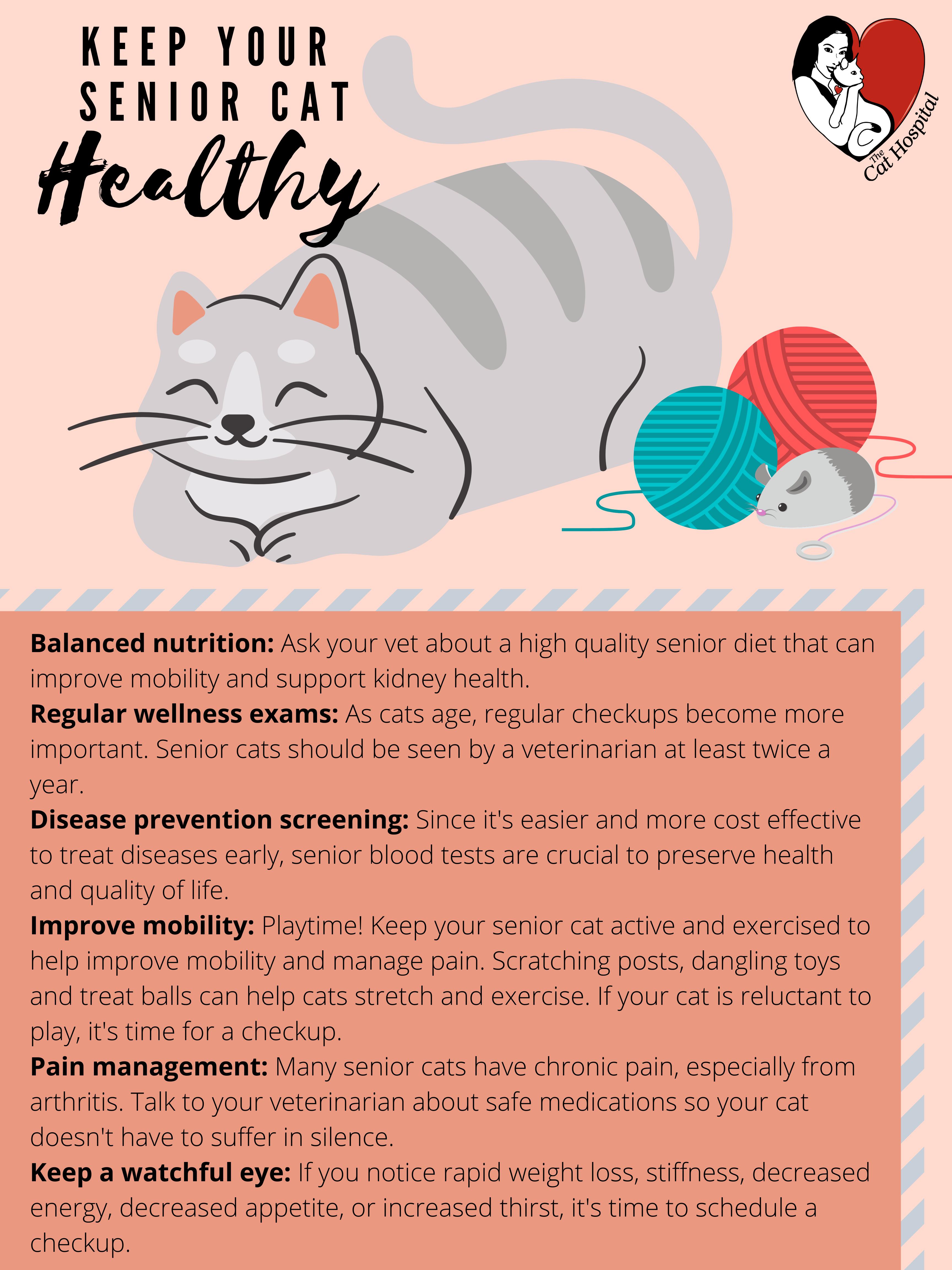 Keep Senior Cat Healthy