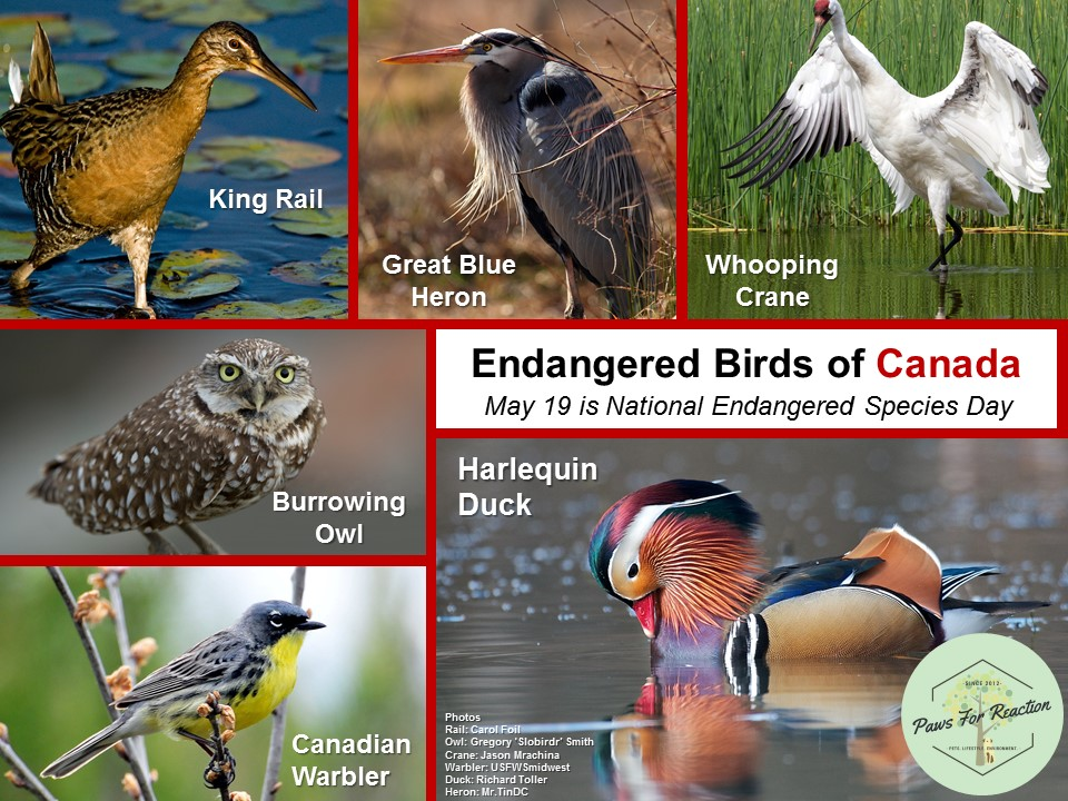 Endangered Birds of Canada