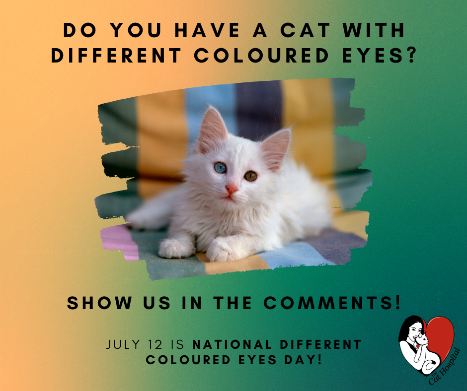 July 12 Different Coloured Eyes Day