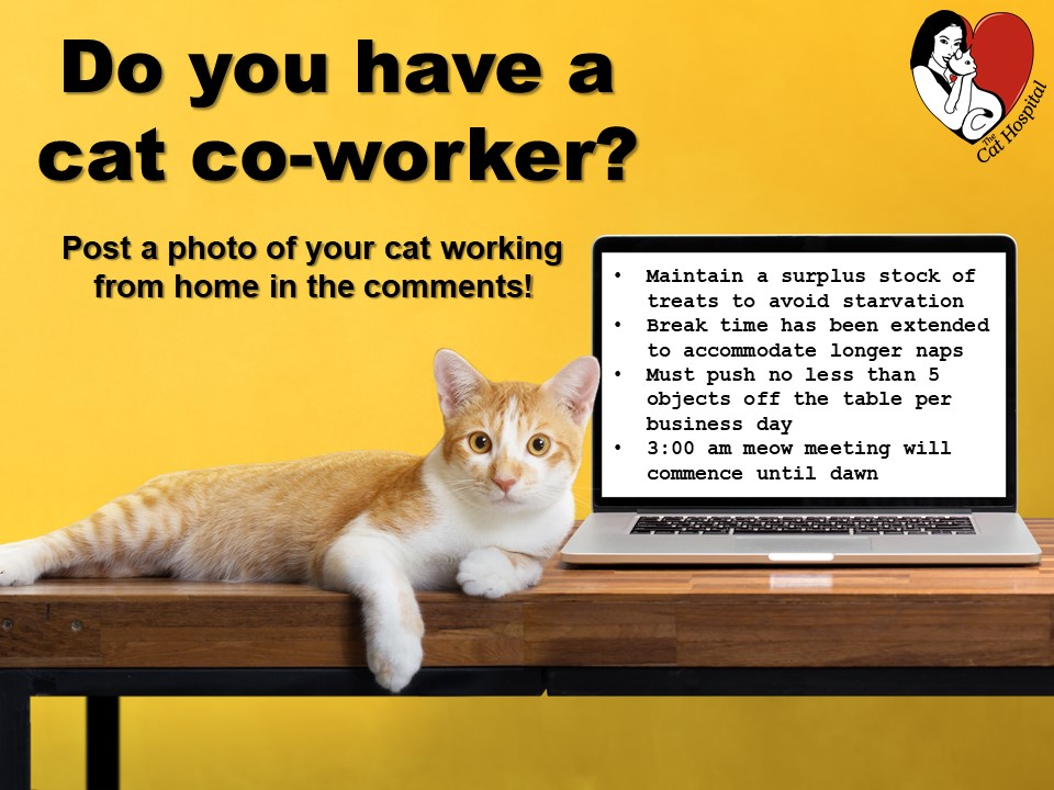 Work from home cat
