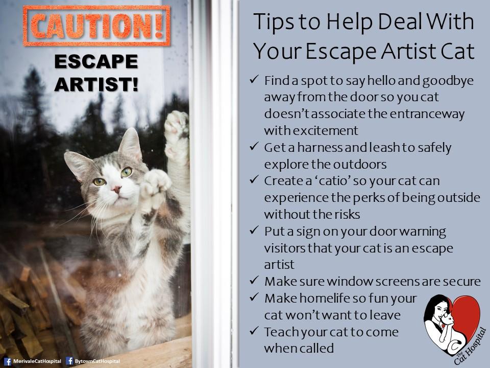Escape Artist Cat